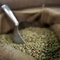 Zöld kávé része lehet az egészséges táplálkozásnak