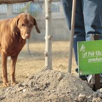 Emlékfák ültetésével búcsúzott a Zöld Pardon (galéria és videó)