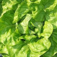 Indiai saláta