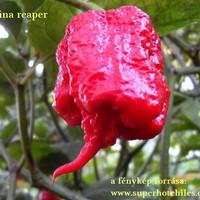 Carolina reaper és társai 2016 1-6 hónap