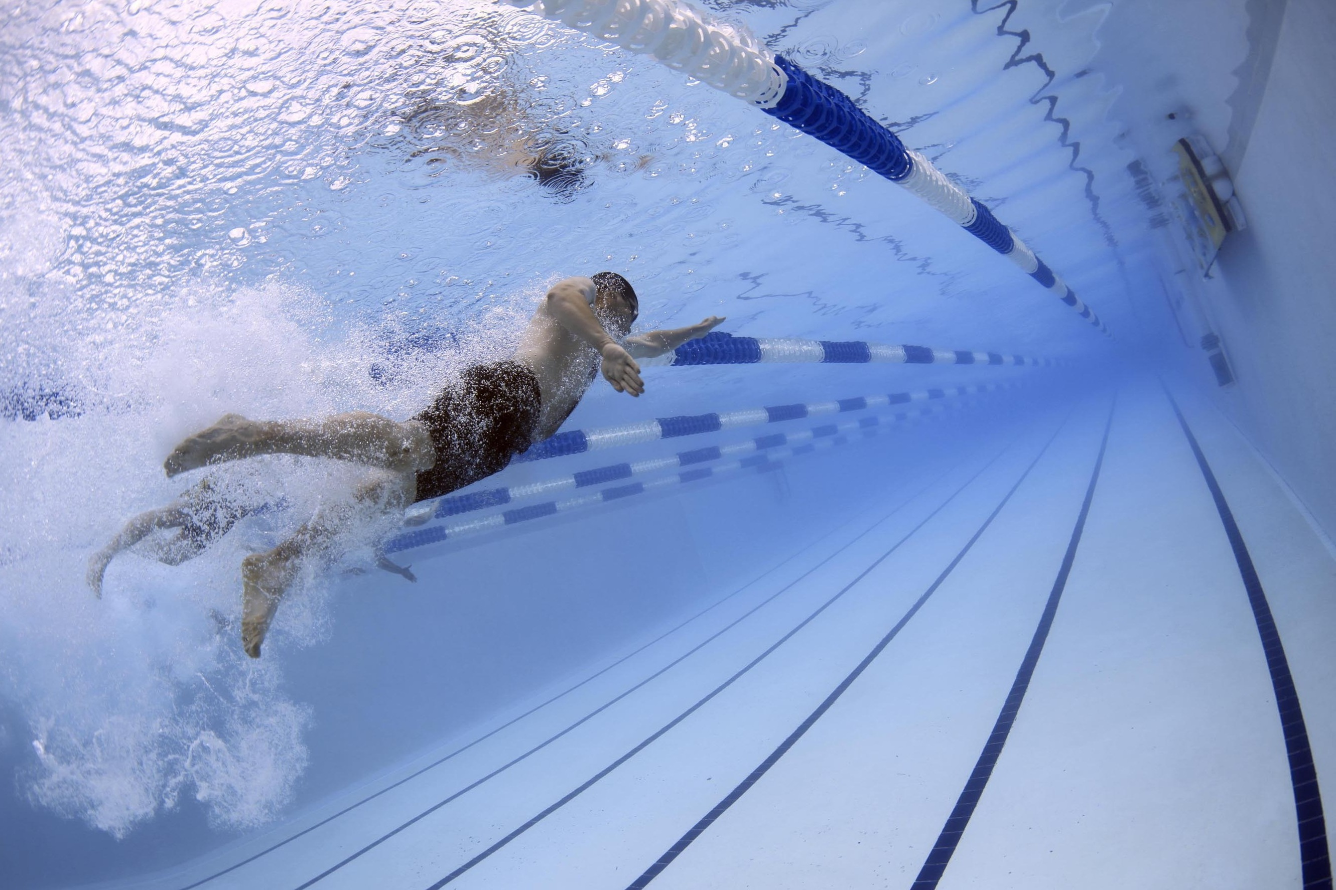 swimmers-swimming-race-competition-56837_1.jpeg