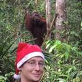 Kalimantán 1. - Karácsony orángutanokkal