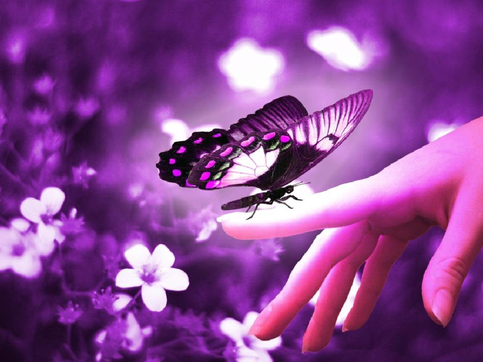 butterflies-hd-wallpapers-hd-wallpapers-inn.jpg