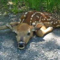 Bambi pörkölt hatósági engedéllyel