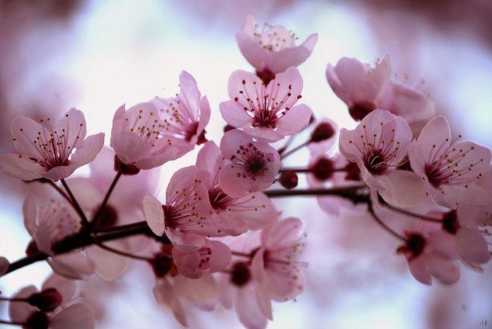 tavaszi-textil-tapeta-1.jpg