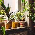 Növényzet és ami mögötte van
