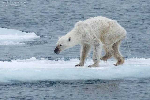 Sokkoló fotó mutatatja a klímaváltozás hatását