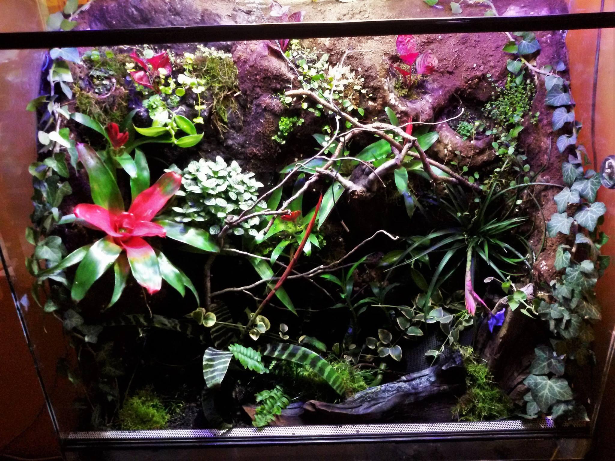 Így neveld a trópusi szobakerted!