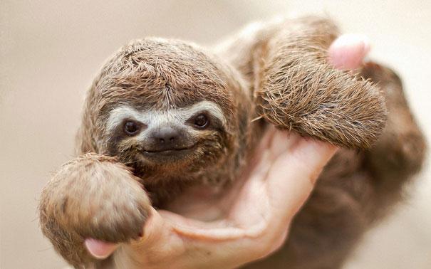 cute-baby-animals-34.jpg