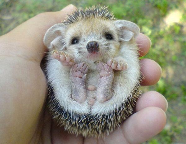cutest-baby-animals-21.jpg