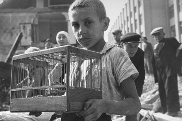 Kisfiú a kanáriját menti a romok közül