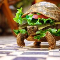 Szendvics teknős