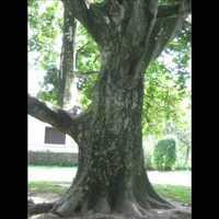 Ez egy fa