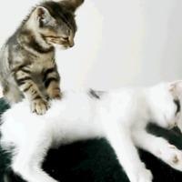 Masszírozás! A macskáknak is jól esik :D