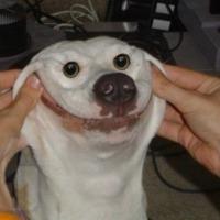 Happy :)