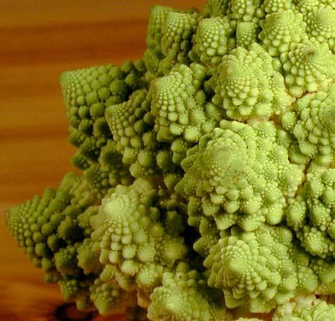 broccoflower-fractal.jpg