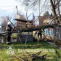 Buszmegállóra dőlt egy fa Csákváron!