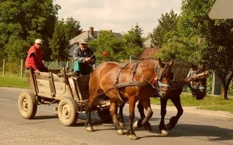 lovaskocsi.jpg