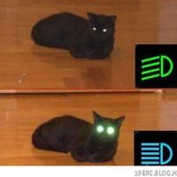 A macskák mindenre képesek