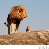 Mufasa és Simba a valóságban