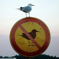 Lesz*rom a szabályokat bazze.