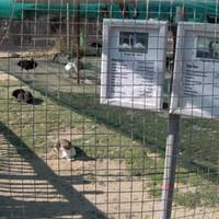 Kilencvenhatodik nap – Betegen az Állatkertben