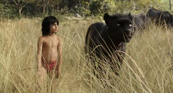 a_dzsungel_6.jpg