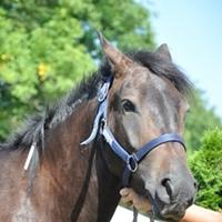 Kisfilm a lovastúráról