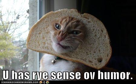 funny-cat-pictures-u-has-rye-sense-ov-humor.png