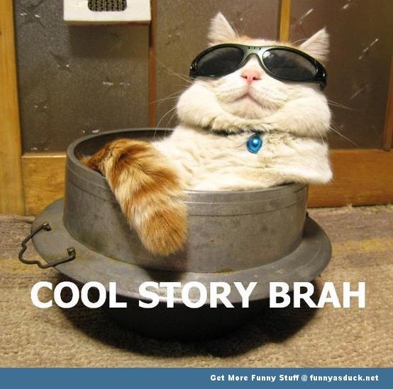funny-cool-story-cat.jpg
