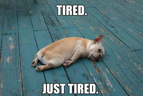 funny-dog-tired-sleeping.jpg
