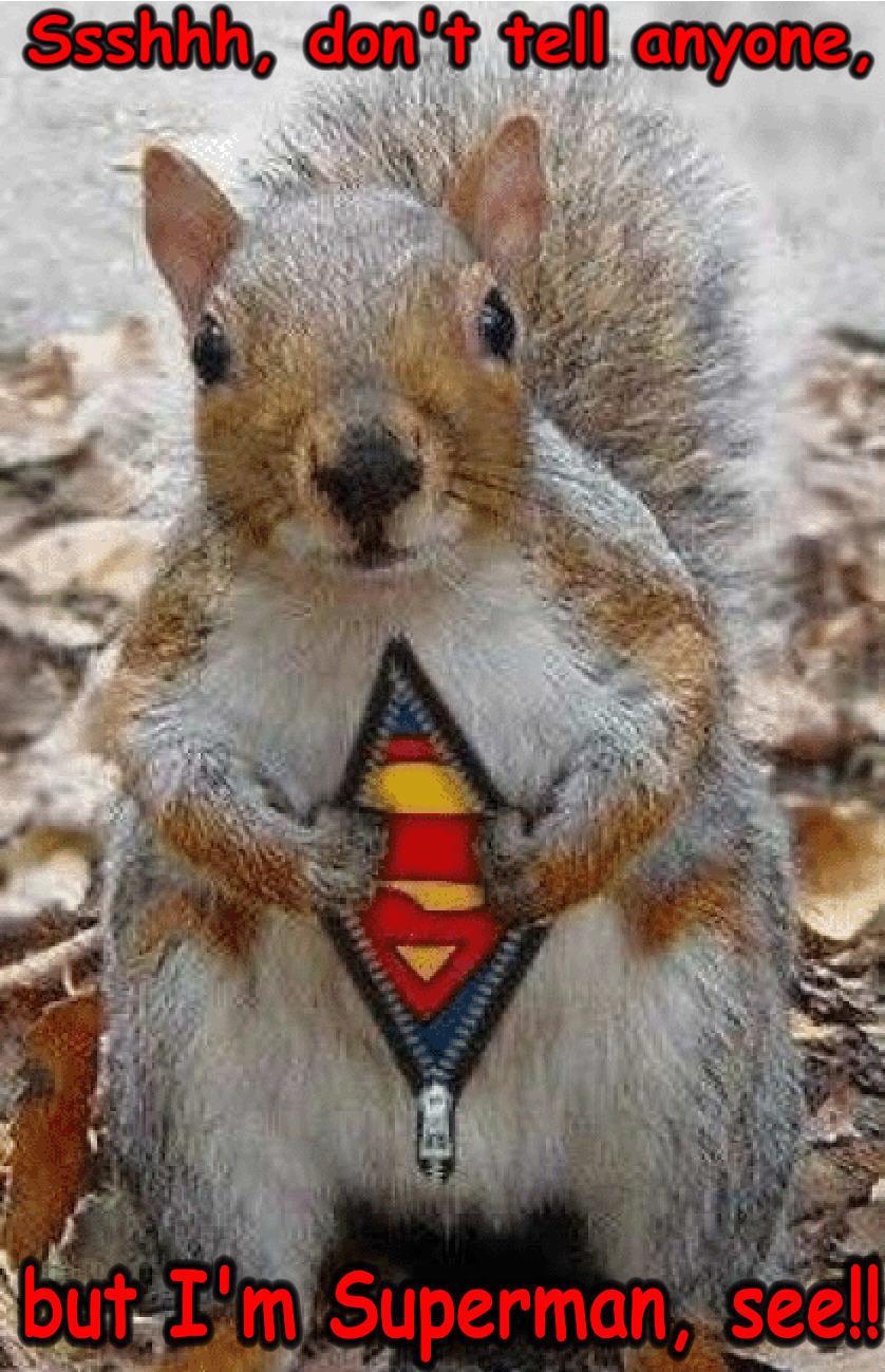 squirrel-funny-animal-humor-20269148-838-1299.jpg