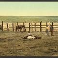 120 éves, színezett képek a vadnyugatról