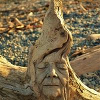 Lenyűgöző uszadékfa szobrok