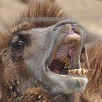 A világ legrondább állatai