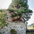 Fenyőfa nőtt ki a templomból