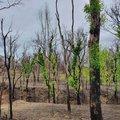 Életre kelt a természet a tűz után Ausztráliában