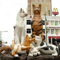 Kuching a macskák városa