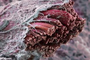 20 dolog, ami nagyon bizarrul néz ki a mikroszkóp alatt