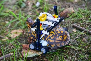 Legóból készült kerekesszéket kapott a sérült teknős ...