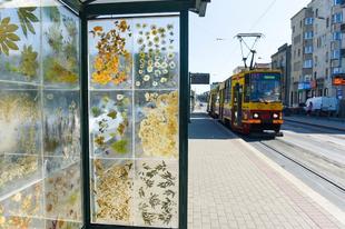 Virágokkal díszített villamosmegálló Łódź városában.