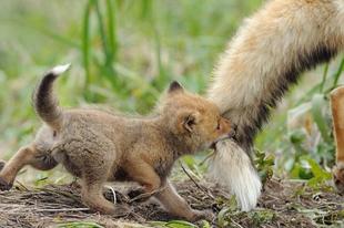 Imádni való újszülött állatok.