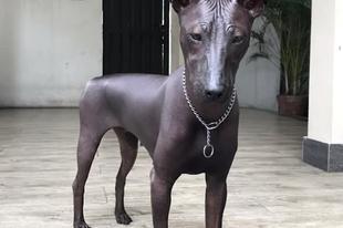 Bronz szobornak nézik az élő kutyát