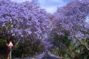 12 csodálatos fákkal övezett út.