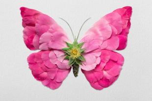 Virágokból készült rovarok.