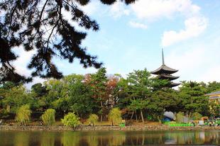 A Nara Park