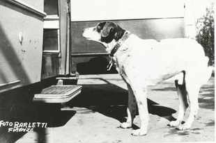 Fido kutya, a II. világháború mártírja