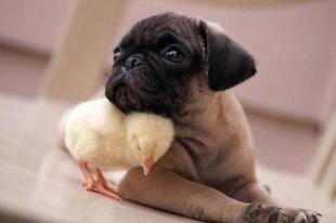 Aranyos állatok.