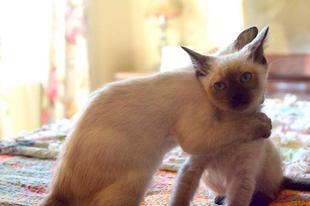 Ölelkező macskák.