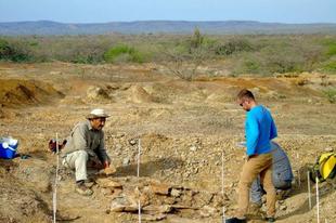 Körülbelül 13 millió éves teknős fosszíliáját fedezték fel Dél-Amerikában.